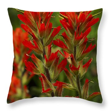 Indian Paintbrush Throw Pillow by Alan Vance Ley