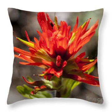Indian Paintbrush Throw Pillow by Belinda Greb