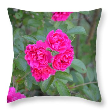 Indiana Roses Throw Pillow by Alys Caviness-Gober