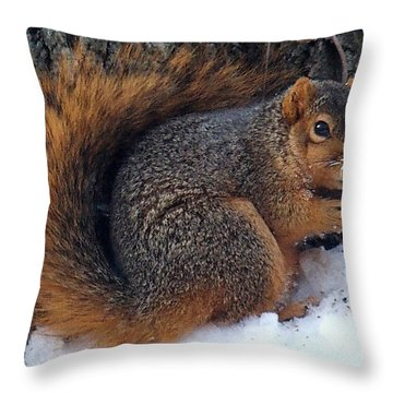 Indiana Squirrel In Winter With Nut Throw Pillow by Steve Archbold
