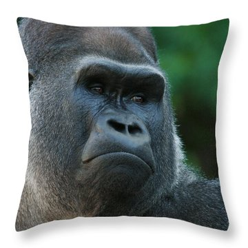 Throw Pillow featuring the photograph Indifference by Judy Whitton