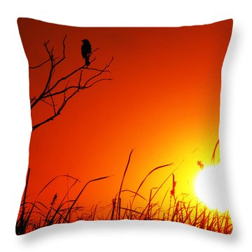 Indifferent Throw Pillow