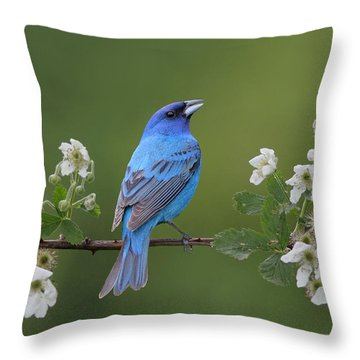 Indigo Bunting On Berry Blossoms Throw Pillow