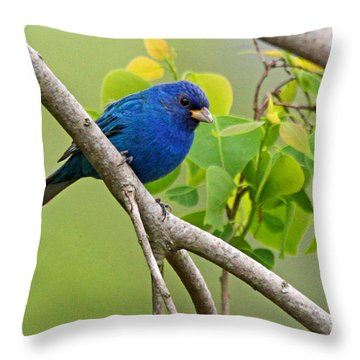 Blue Indigo Bunting Bird  Throw Pillow