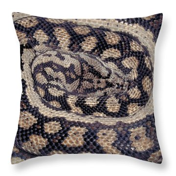 Inland Carpet Python  Throw Pillow