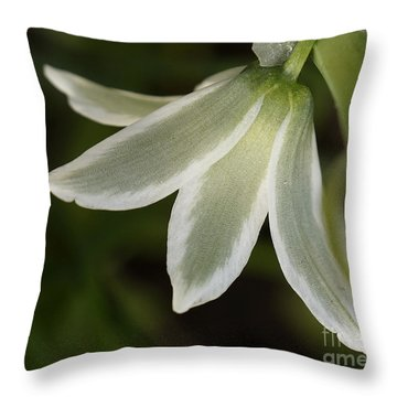 Throw Pillow featuring the photograph Inner Glow by Inge Riis McDonald