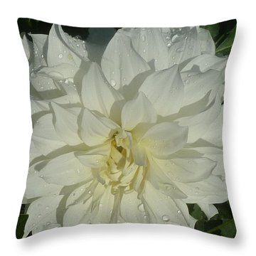 Throw Pillow featuring the photograph Innocent White Dahlia  by Susan Garren