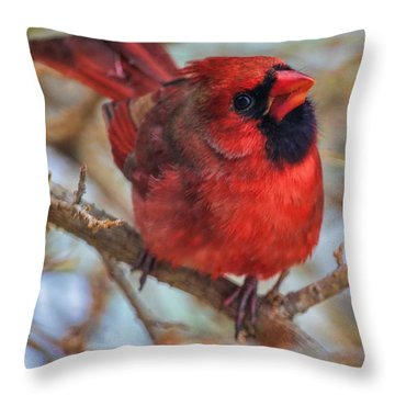 Inquisitive Cardinal Throw Pillow