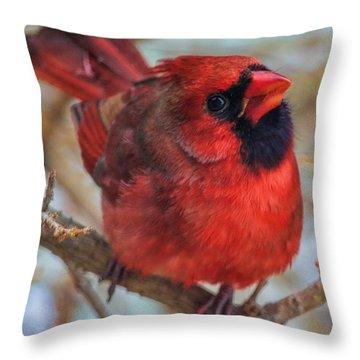 Inquisitive Cardinal Throw Pillow