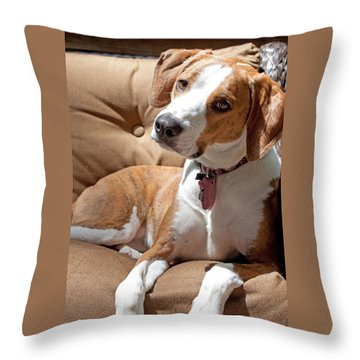 Throw Pillow featuring the photograph Inquisitive by Jean Haynes