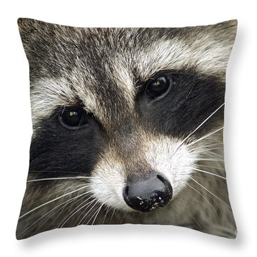 Inquisitive Raccoon Throw Pillow by Jane Axman