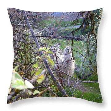 Inquisitive Throw Pillow by Tom Mansfield