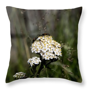 Throw Pillow featuring the photograph Insect On White Flower by Leif Sohlman