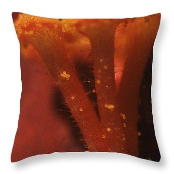 Rose Of Sharon Throw Pillows