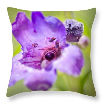 Throw Pillow featuring the photograph Inside by Priya Ghose