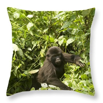 Throw Pillow featuring the photograph Into The Light by Liz Leyden