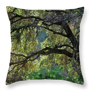 Throw Pillow featuring the photograph Into The Woods by Susan Wiedmann