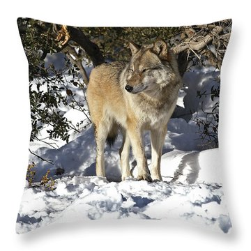 Throw Pillow featuring the photograph Inuk by Lee Kirchhevel