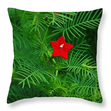 Ipomoea Quamoclit Throw Pillow