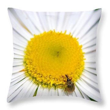 Iridescent Weevil On Daisy 2 Throw Pillow