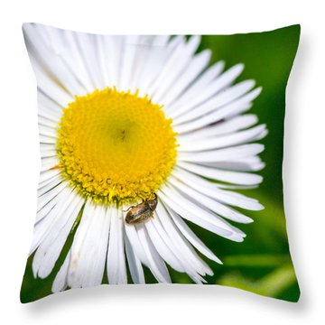 Iridescent Weevil On Daisy Throw Pillow
