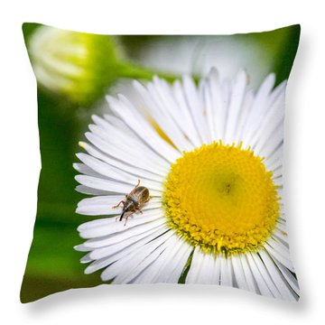 Iridescent Weevil On Daixy 3 Throw Pillow