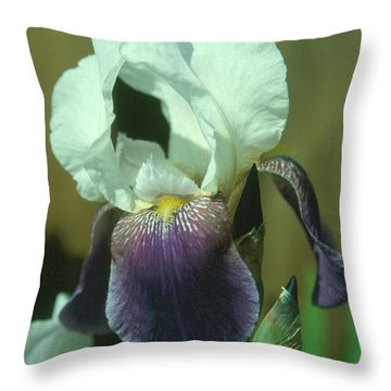 Iris 3 Throw Pillow by Andy Shomock
