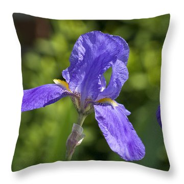 Iris 4 Throw Pillow by Andy Shomock