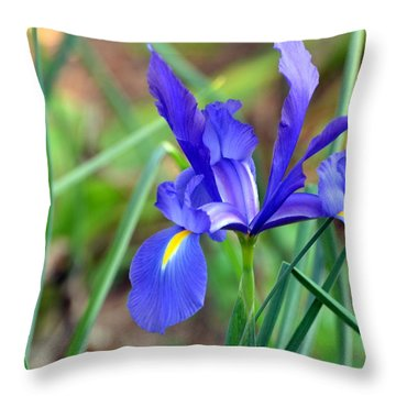 Iris Throw Pillow by Jodi Terracina