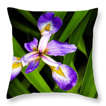 Iris Pinwheel Throw Pillow