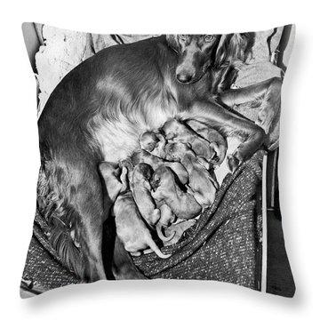 Irish Setter With 12 Puppies Throw Pillow