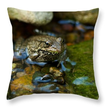 Throw Pillow featuring the photograph Is There A Prince In There? - Frog On Rocks by Jane Eleanor Nicholas