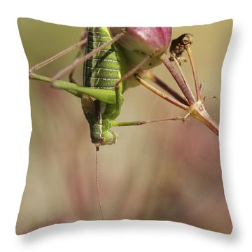 Isophya Savignyi - Bush Cricket Throw Pillow by Alon Meir