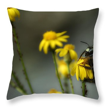 It's Mine-all Mine Throw Pillow by Michael Eingle