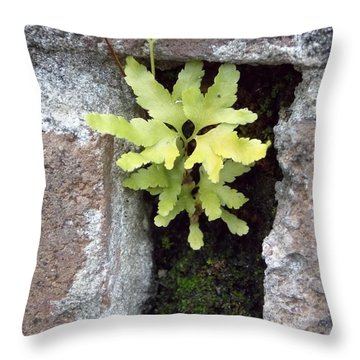 Throw Pillow featuring the photograph Its The Little Things In Life by John Glass