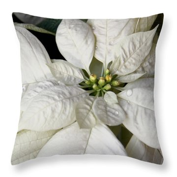 Ivory Poinsettia Christmas Flower Throw Pillow by Jennie Marie Schell