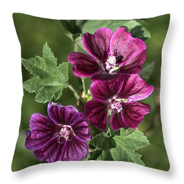 Ivy-leafed Geraniums   Throw Pillow by Joy Watson