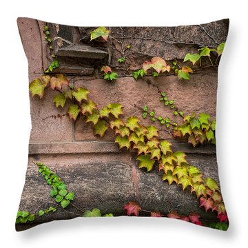 Ivy League Throw Pillow