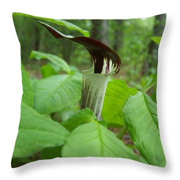 Jack In The Pulpit Throw Pillow by William Tanneberger