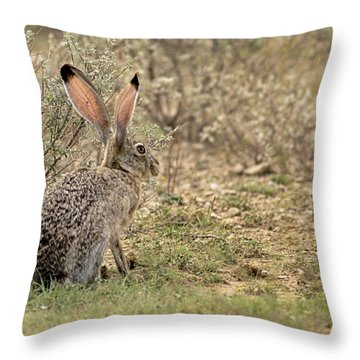 Jack Rabbit Throw Pillow