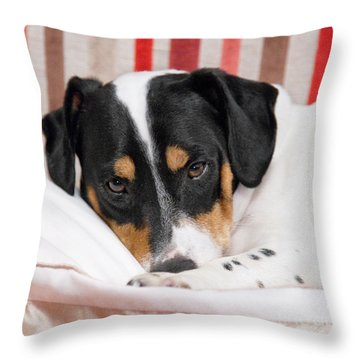 Jack Russell Terrier Dog - Square Format Throw Pillow by Natalie Kinnear