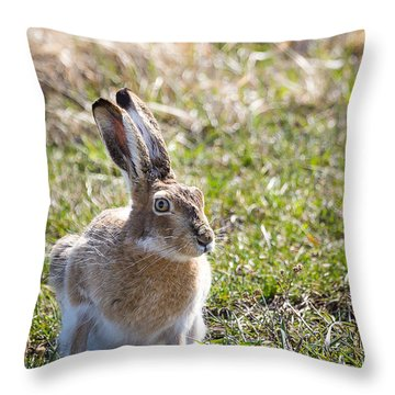 Jackrabbit Throw Pillow