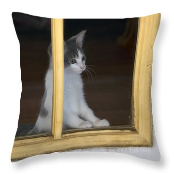Jackson The Inquisitive Kitty Throw Pillow by Thomas Woolworth