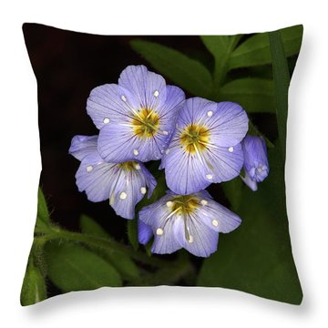 Throw Pillow featuring the photograph Jacobs Ladder by Alan Vance Ley