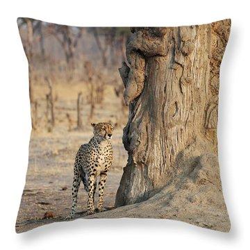 Jaguar In Hwange National Park Throw Pillow by BC Imaging