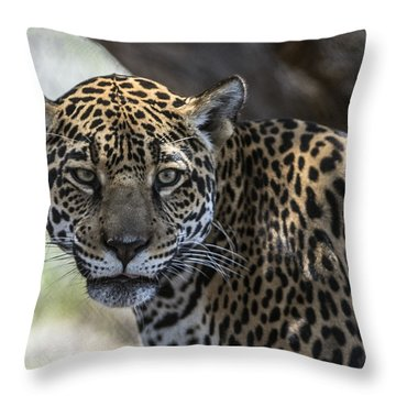 Jaguar Portrait Throw Pillow