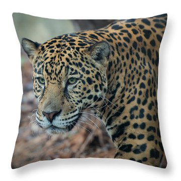Jaguar Stare Throw Pillow