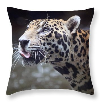 Throw Pillow featuring the photograph Jaguar Sticking Out Tongue by Shoal Hollingsworth
