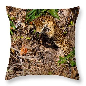 Jaguar Vs Caiman 2 Throw Pillow