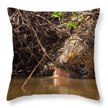 Jaguar Vs Caiman Throw Pillow
